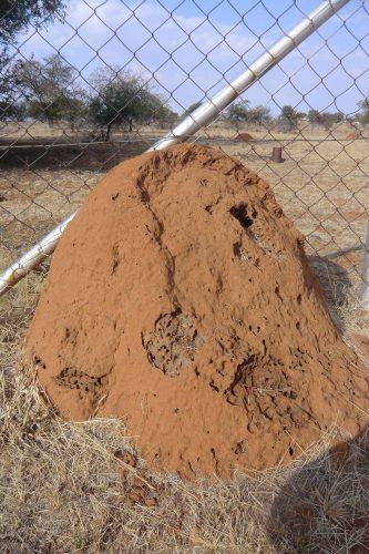 Termitenhügel sind weit verbreitet.