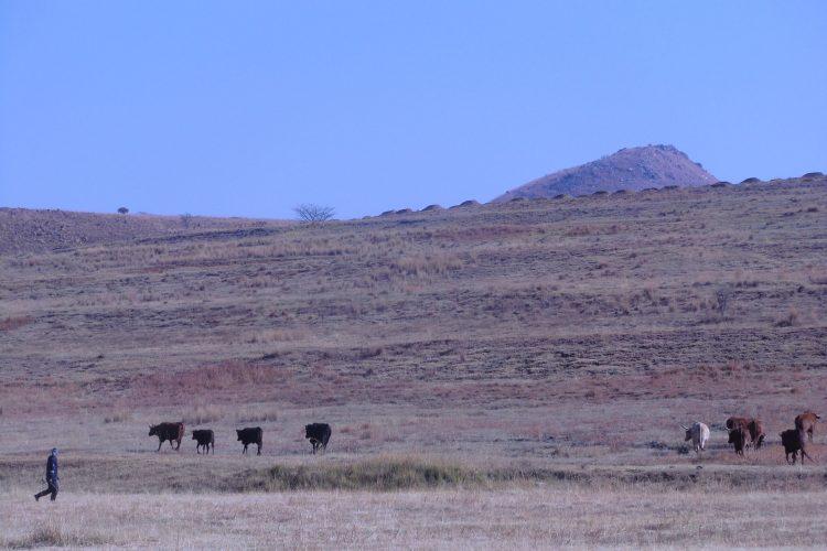 Tierischer Besuch. Die Hügel im Hintergrund sind künstlich aus dem Aushub der Mine entstanden.