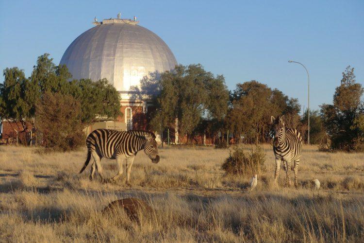 Und Zebras :-) Im Hintergrund ein altes Observatorium. Die weißen Vögel folgten den Zebras übrigens...