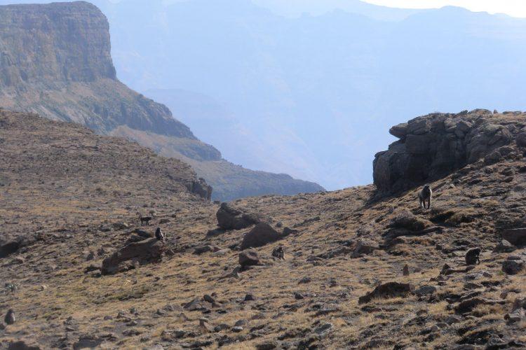 In den meisten Bergregionen leben Paviane, denen man besser nicht zu nahe kommt.