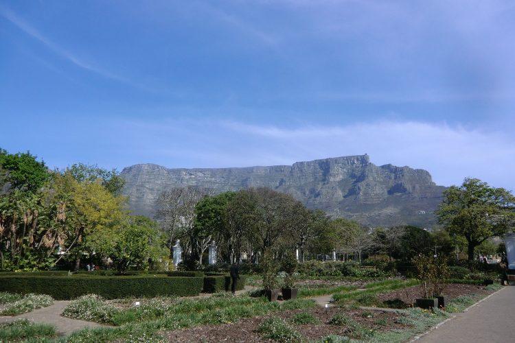 Der die ganze Stadt überragende Tafelberg. Im Vordergrund die Companies Gardens, die früher als Gemüsegarten genutzt wurden und heute ein öffentlicher Park mit sehr vielen verschiedenen Pflanzen sind.
