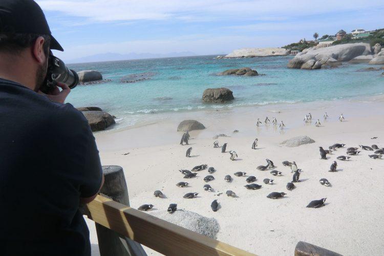 ... der für seine Kolonie von ca. 2800 Brillenpinguinen bekannt ist!