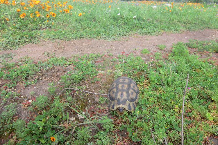 Schildkröten haben dort auf den Straßen Vorrang.