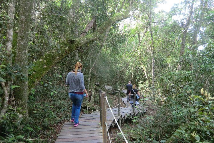Im Tsitsikamma National Park, der einen der wenigen Wälder Südafrikas umfasst.