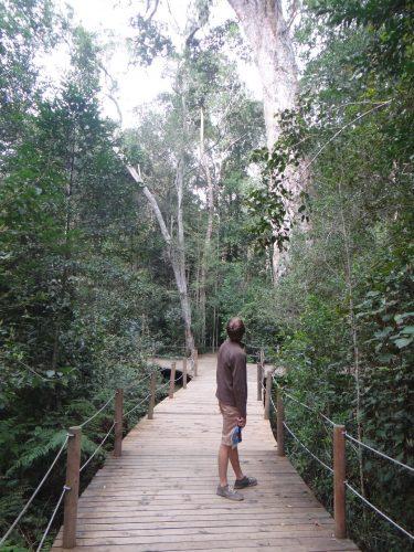 """Passt nicht ganz aufs Bild: Der """"Big Tree"""", ein ca. tausendjähriger, 36 Meter hoher Yellowwood-Baum mit 8 Metern Stammumfang."""