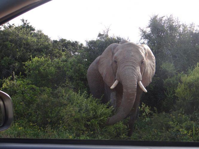 Der dritte im Bunde widmete sich derweil der Vegetation neben unserem Auto...