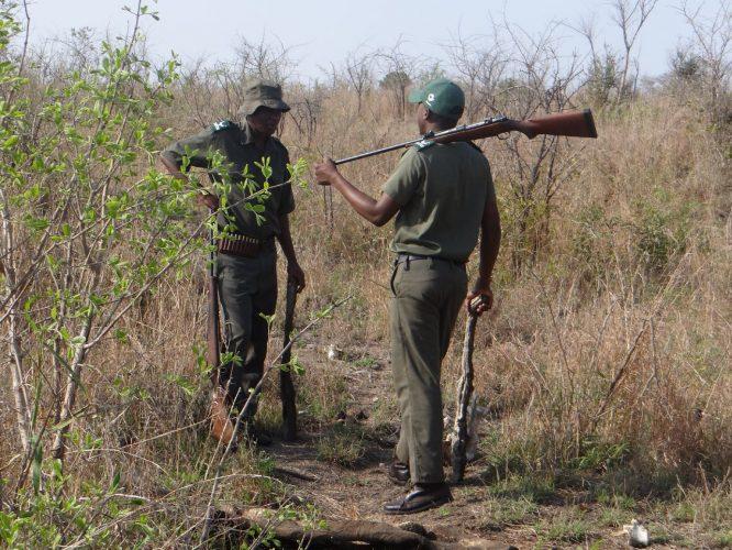 Neben den Gewehren samt Munition, die einen Nashornschädel durchschlagen kann, waren auch die Holzprügel zur Sicherheit. Allerdings weniger für den Nahkampf, sondern um sie wegzuwerfen und so den Tieren durch das Geräusch beim Aufkommen einen falschen Aufenthaltsort zu suggerieren.