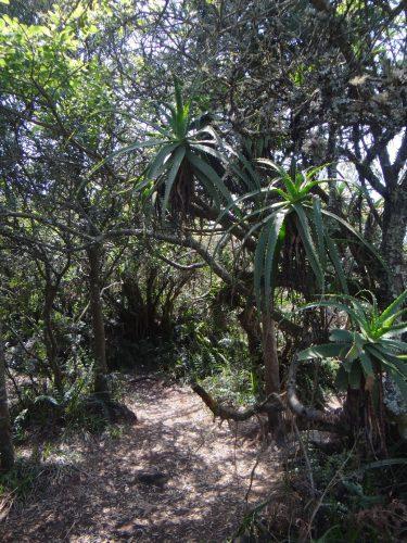 An einem anderen Aussichtspunkt fand sich durch die besondere Exposition am Hand ein kleines Stück Regenwald.