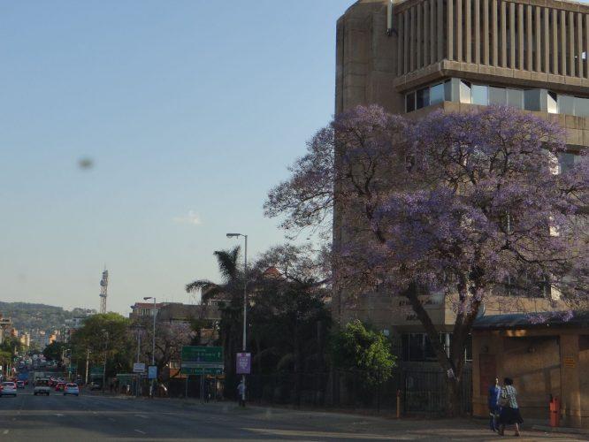 Pretoria, eine der drei Haupstädte Südafrikas, ist nur rund 50 Kilometer von Johannesburg entfernt. Im Frühling sind zahlreiche Straßen von lila blühenden Jacaranda-Bäumen gesäumt.
