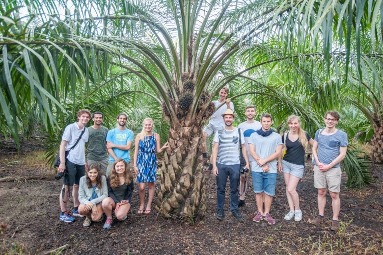 On the way back, we shortly stopped to have a look at another infamous fruit - the oil palm.