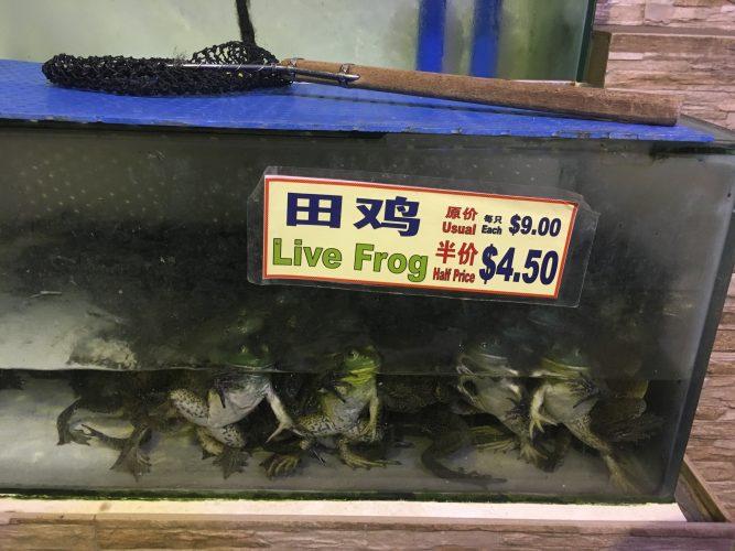 Frog for dinner?