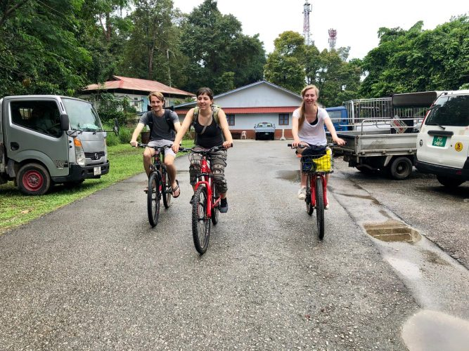 """One of the few """"natural"""" spots in Singapore is the small island of Palau Ubin, which is almost entirely covered in rainforest and can be explored by (slightly too small) bikes."""