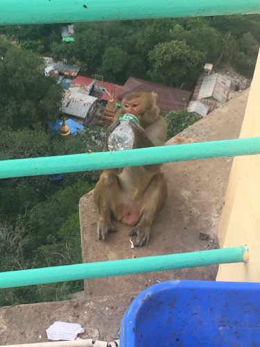 The true rulers of the mountain are monkeys who frequently steal food and drinks from unattentive visitors.
