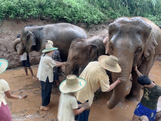 The favorite stop for the elephants was the mud bath.