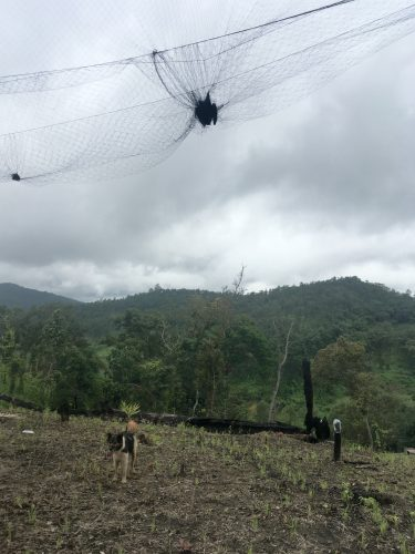 The villagers put up nets to capture birds.