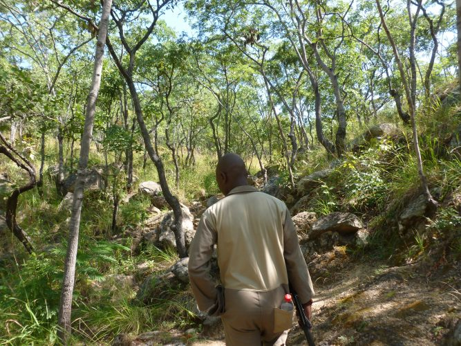 After that, we climbed Michiru, one of the hills surrounding Blantyre. The good thing about Michiru is that it is a protected area which means that it still has trees. All other hills have been completely deforestated, which also makes climbing them a very sweaty experience.