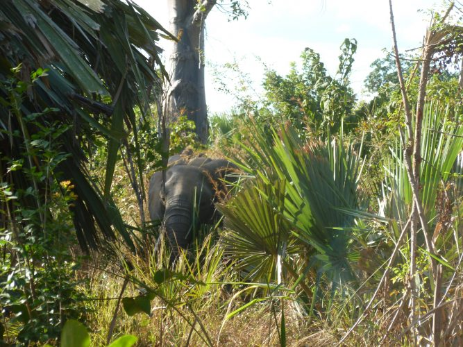 When we walked around the camp, we came across elephants at around 10 meters from us.