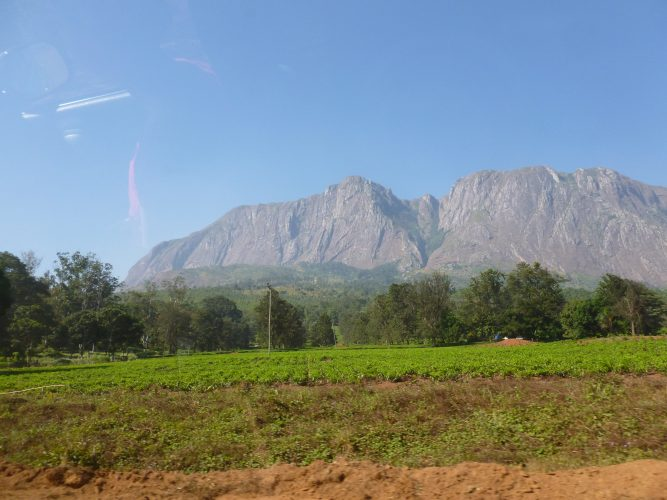 Approaching the Mulanje Massive for our trek last weekend. The bright green in the foreground are tea plantations.