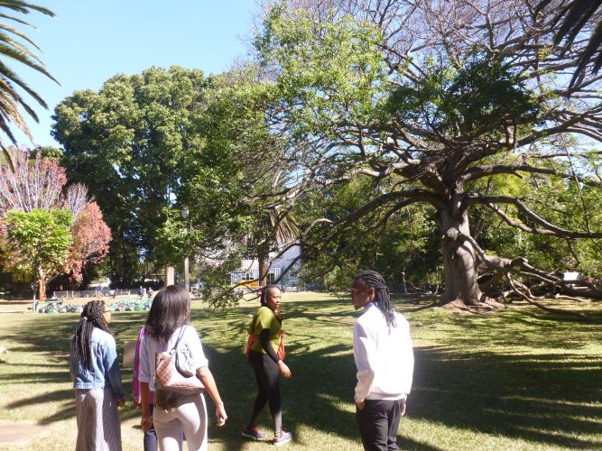 In Harare, I did a free walking tour with a local student. Here, we are in Harare Gardens, which is a nice park with some old trees (this one is around 100 years old).