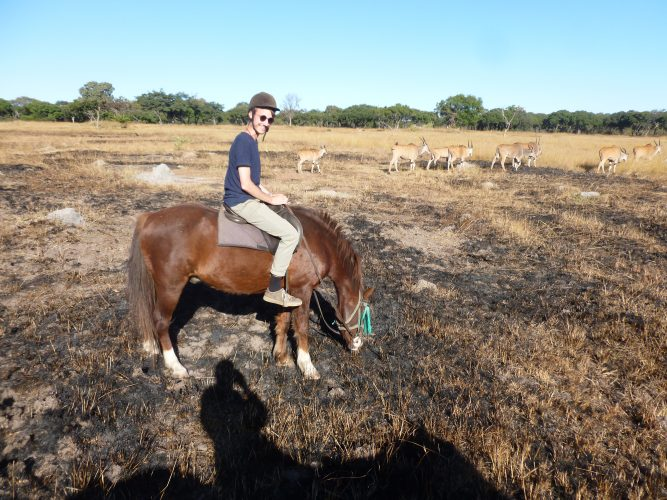 Basically right in the city, there is a small game reserve offering horseback safaris. Which has the advantage that you get quite close to animals as they accept horses more than cars or pedestrians. So here we met some elands...