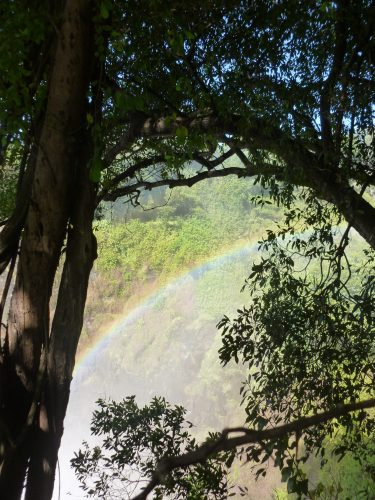As the air is so moist, rainbows are a common sight all around the falls.