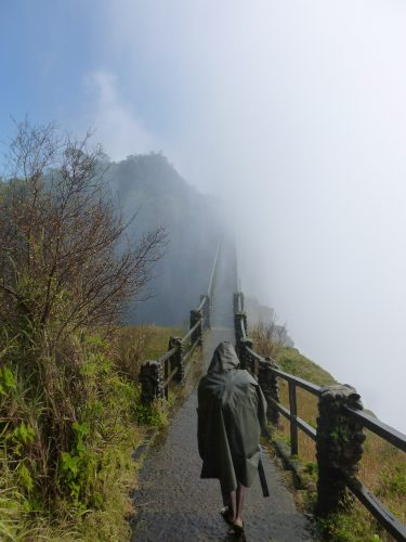At one point, we had to cross a small bridge to get to another patch of rainforest. The bridge was completely within the water vapour cloud, so it gave a good feeling for what it must be like to walk through a cloud. It's wet. Very wet.